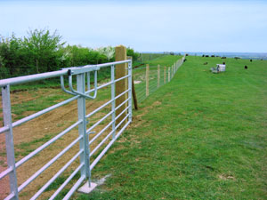 Sheep Fencing with double gates.