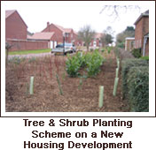 Click to view. Tree & Shrub Planting Scheme on a New Housing Development